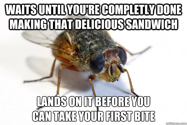 waits until you're completly done making that delicious sandwich lands on it before you can take your first bite - waits until you're completly done making that delicious sandwich lands on it before you can take your first bite  Scumbag Housefly