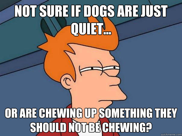 NOT SURE IF DOGS ARE JUST QUIET... OR ARE CHEWING UP SOMETHING THEY SHOULD NOT BE CHEWING? - NOT SURE IF DOGS ARE JUST QUIET... OR ARE CHEWING UP SOMETHING THEY SHOULD NOT BE CHEWING?  Futurama Fry