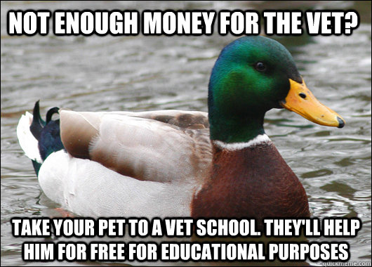 not enough money for the vet? take your pet to a vet school. they'll help him for free for educational purposes - not enough money for the vet? take your pet to a vet school. they'll help him for free for educational purposes  Actual Advice Mallard