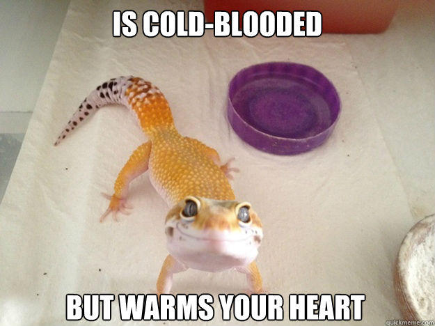 is cold-blooded but warms your heart  Ridiculously Photogenic Gecko