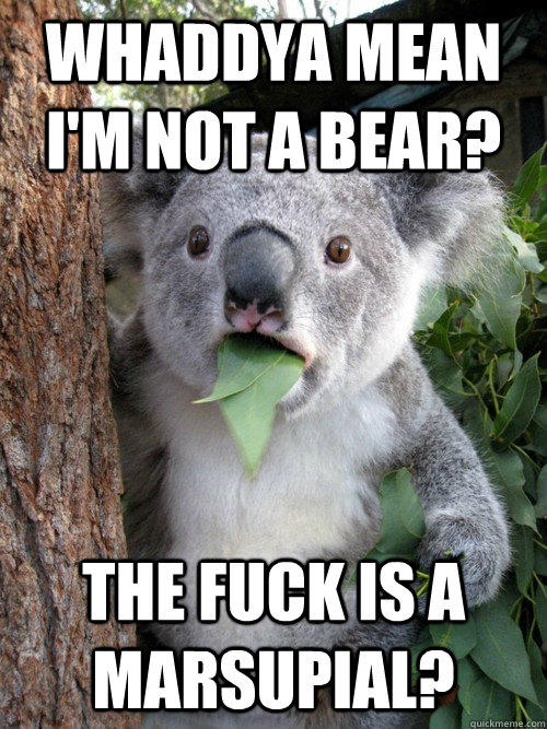 Whaddya mean I'm not a bear? the fuck is a marsupial?  koala bear