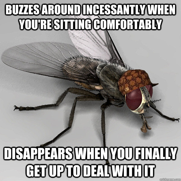 Buzzes around incessantly when you're sitting comfortably Disappears when you finally get up to deal with it - Buzzes around incessantly when you're sitting comfortably Disappears when you finally get up to deal with it  Scumbag Fly