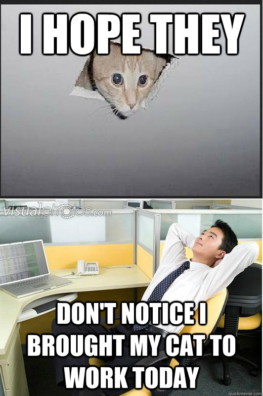 I HOPE THEY  DON'T NOTICE I BROUGHT MY CAT TO WORK TODAY - I HOPE THEY  DON'T NOTICE I BROUGHT MY CAT TO WORK TODAY  ceiling cat office thoughts