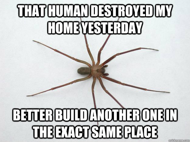 That human destroyed my home yesterday better build another one in the exact same place - That human destroyed my home yesterday better build another one in the exact same place  Misc