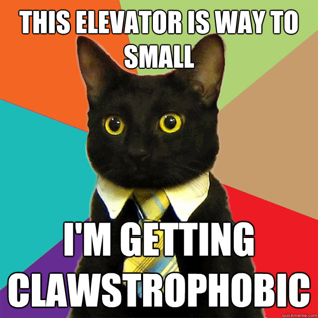 this elevator is way to small i'm getting clawstrophobic - this elevator is way to small i'm getting clawstrophobic  Business Cat