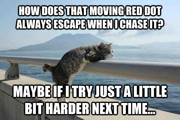 HOW DOES THAT MOVING RED DOT ALWAYS ESCAPE WHEN I CHASE IT? MAYBE IF I TRY JUST A LITTLE BIT HARDER NEXT TIME...  Existential Crisis Cat