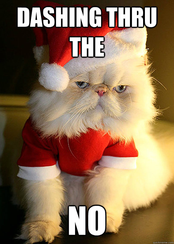 Dashing thru the NO - Angry Cat - quickmeme