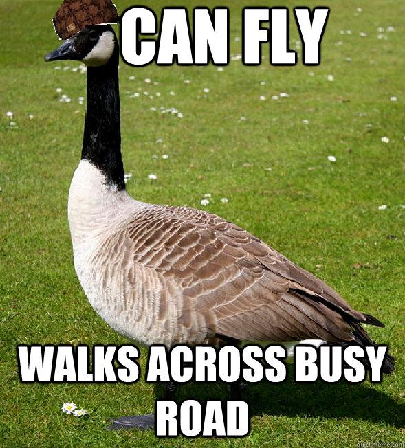 can fly Walks across busy road
