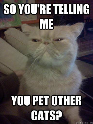 so you're telling me you pet other cats?  Skeptical cat