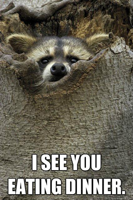 I see you eating dinner.  Stalker Raccoon