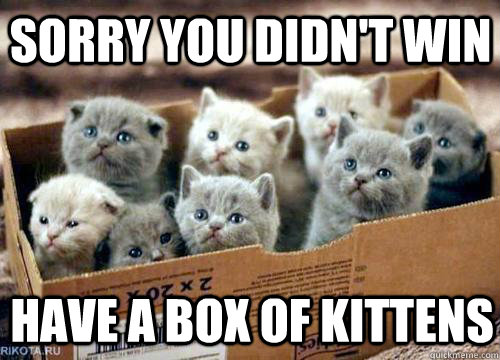 Sorry you didn't win Have a box of kittens  Box of Kittens