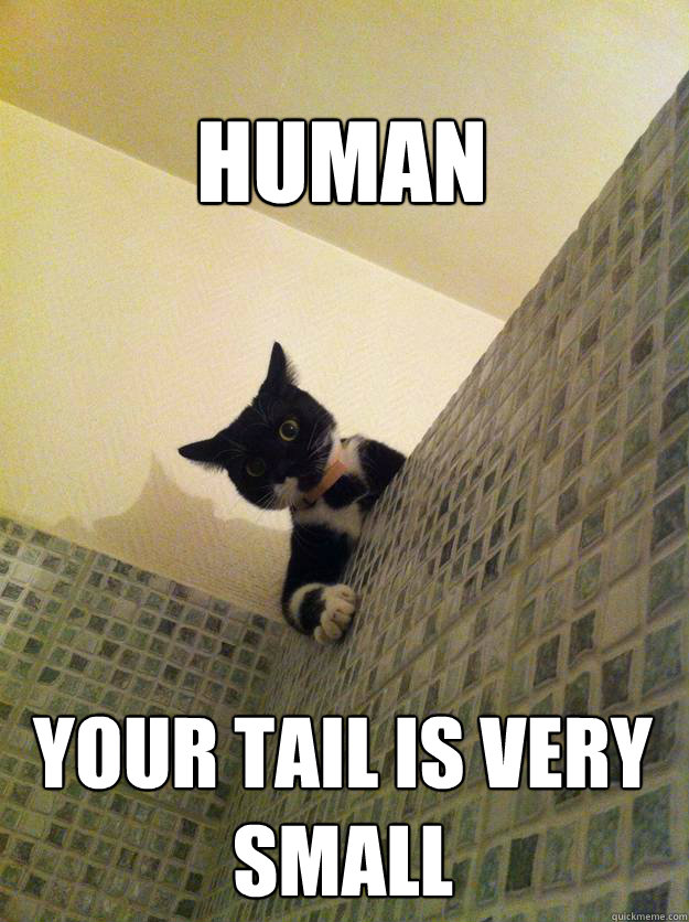 Human Your tail is very small - Human Your tail is very small  Incredulous Cat