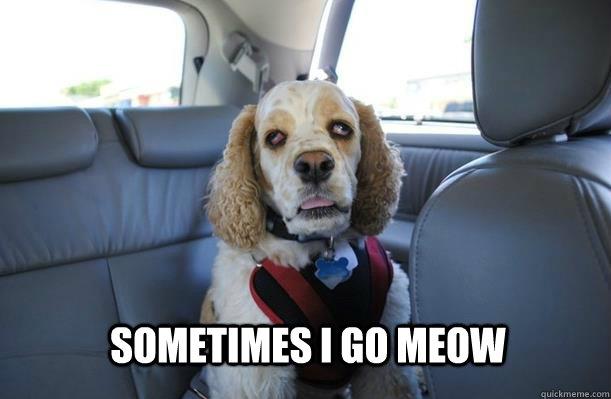 sometimes i go meow - sometimes i go meow  10 Dog