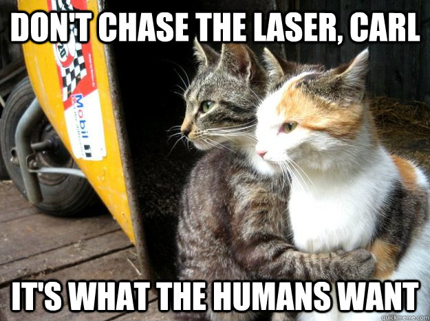Don't chase the laser, carl It's what the humans want - Don't chase the laser, carl It's what the humans want  Restraining Cat