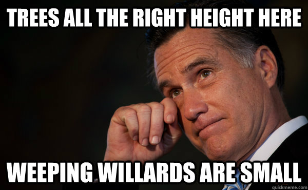 Trees all the right height here weeping willards are small - Trees all the right height here weeping willards are small  Sad Romney