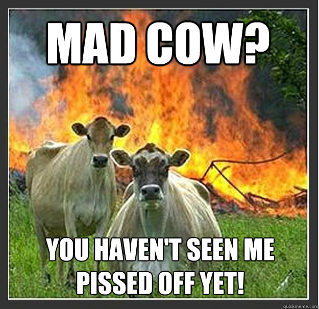 Mad Cow? You haven't seen me pissed off yet! - Mad Cow? You haven't seen me pissed off yet!  Evil cows