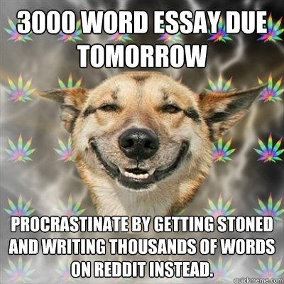 3000 Word essay due tomorrow Procrastinate by getting stoned and writing thousands of words on reddit instead.  Stoner Dog