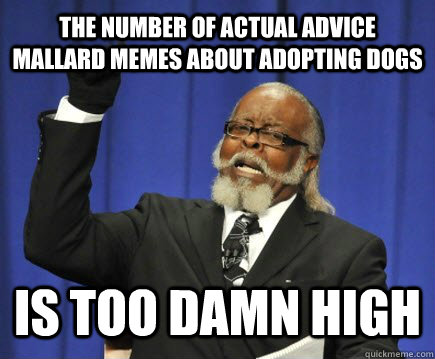 the number of actual advice mallard memes about adopting dogs is too damn high - the number of actual advice mallard memes about adopting dogs is too damn high  Too Damn High