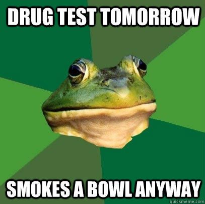 Drug test tomorrow smokes a bowl anyway - Drug test tomorrow smokes a bowl anyway  Foul Bachelor Frog