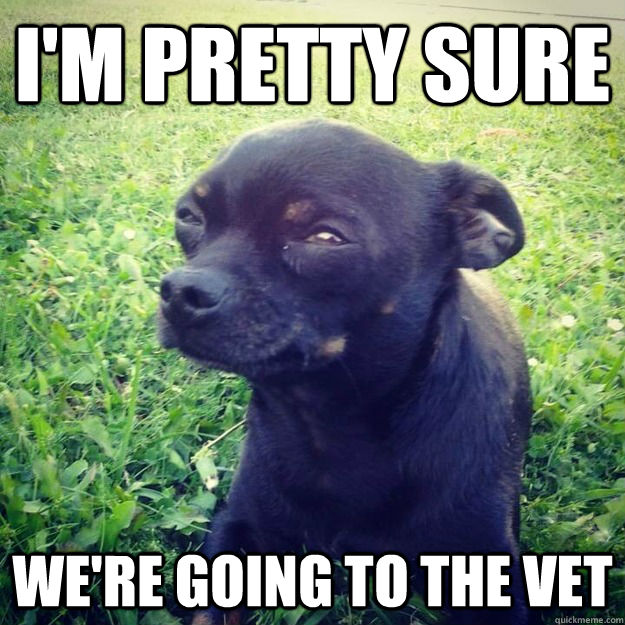 I'm pretty sure We're going to the vet - I'm pretty sure We're going to the vet  Skeptical Dog