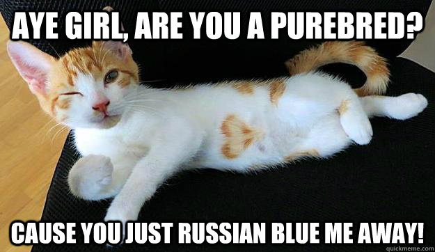 Aye girl, are you a purebred? Cause you just Russian Blue me away! - Aye girl, are you a purebred? Cause you just Russian Blue me away!  Conversation Opening Cat