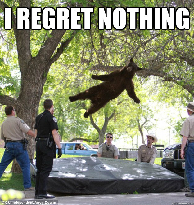 I regret nothing   falling bear