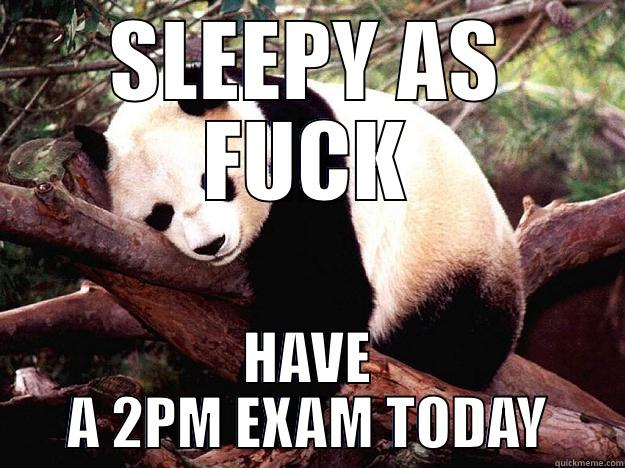 SLEEPY AS FUCK HAVE A 2PM EXAM TODAY Procrastination Panda