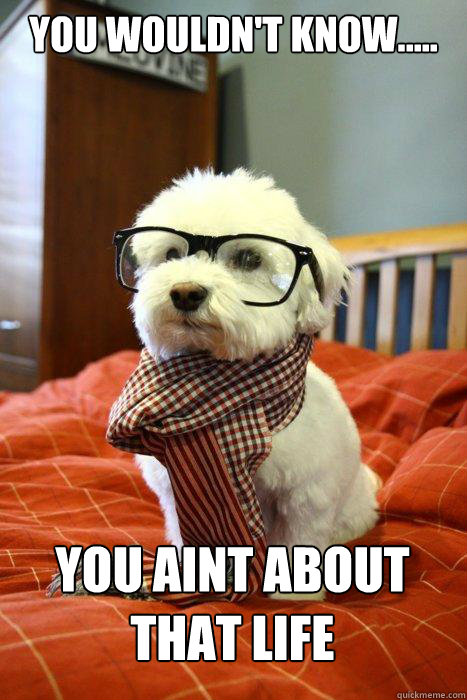 YOU WOULDN'T KNOW..... YOU AINT ABOUT THAT LIFE - YOU WOULDN'T KNOW..... YOU AINT ABOUT THAT LIFE  Hipster Dog