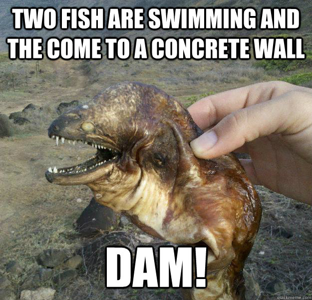 two fish are swimming and the come to a concrete wall  DAM! - two fish are swimming and the come to a concrete wall  DAM!  Poor Joke Eel