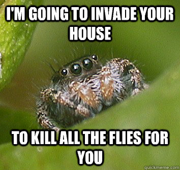 I'm going to invade your house To kill all the flies for you - I'm going to invade your house To kill all the flies for you  Misunderstood Spider