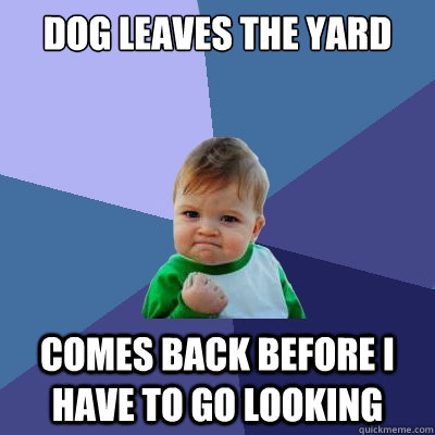 dog leaves the yard Comes back before i have to go looking  Success Kid