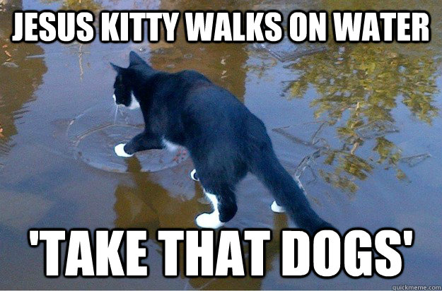 jesus kitty walks on water 'take that dogs' - jesus kitty walks on water 'take that dogs'  Jesus Cat
