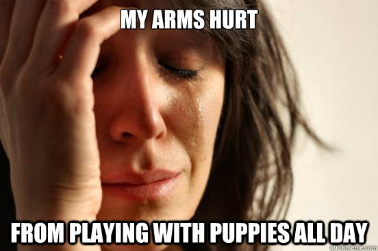 My arms hurt From playing with puppies all day - My arms hurt From playing with puppies all day  First World Problems