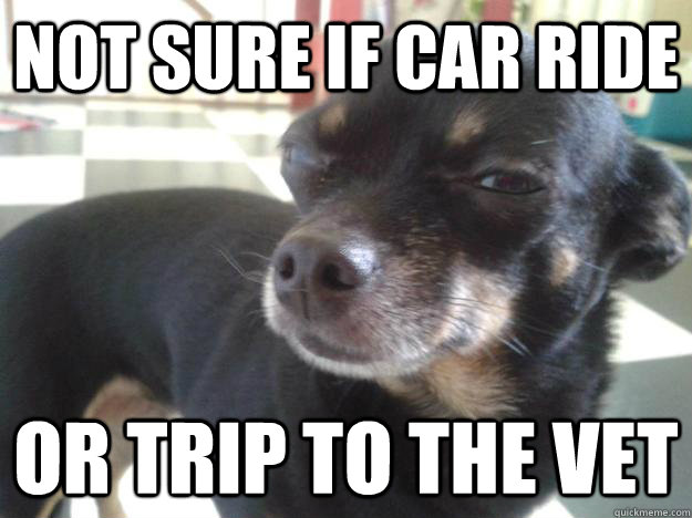Not sure if car ride or trip to the vet - Not sure if car ride or trip to the vet  Misc