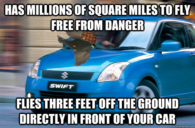 has millions of square miles to fly free from danger flies three feet off the ground directly in front of your car - has millions of square miles to fly free from danger flies three feet off the ground directly in front of your car  Misc