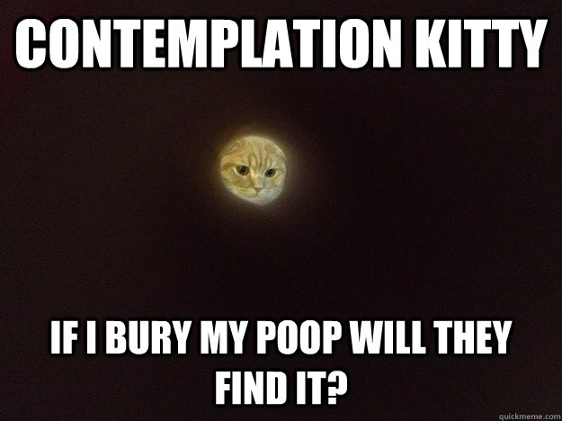 Contemplation kitty if I bury my poop will they find it? - Contemplation kitty if I bury my poop will they find it?  Moon Cat