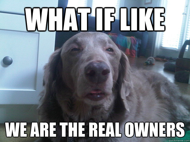 what if like we are the real owners   - what if like we are the real owners    10 Dog