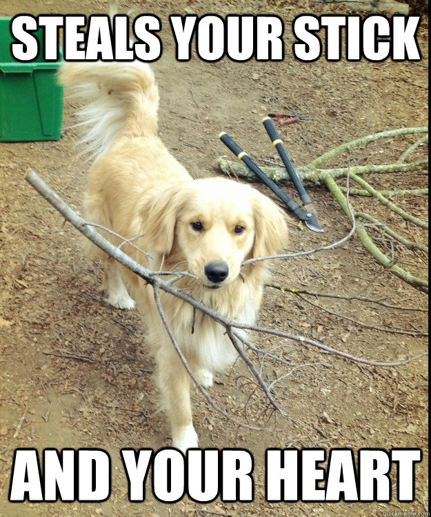 Steals your stick and your heart - Steals your stick and your heart  RPGR