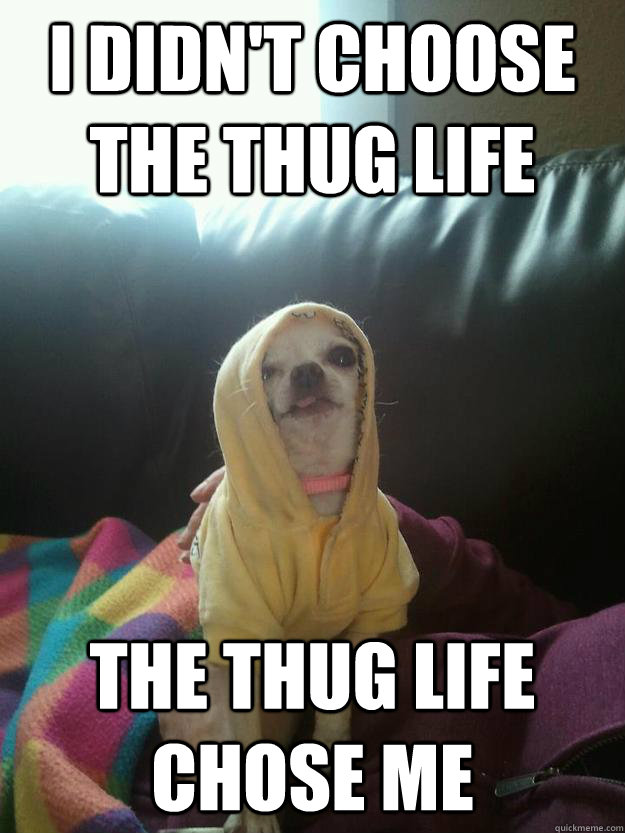 Funny Meme Quotes About Life : I didn t choose the thug life chose me