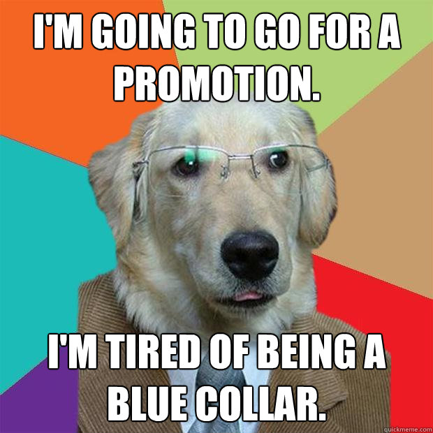 I'm going to go for a promotion. I'm tired of being a blue collar. - I'm going to go for a promotion. I'm tired of being a blue collar.  Business Dog