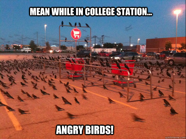 Mean while in college station... angry birds!
