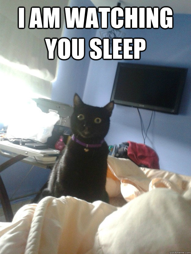 i am watching you sleep  - i am watching you sleep   overly attached cat