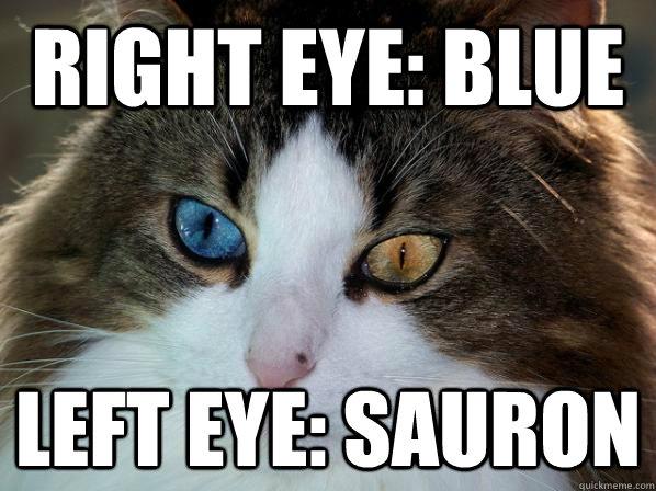 right eye: blue left eye: sauron - right eye: blue left eye: sauron  Odd-eyed cat