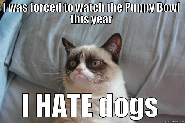 6567af5eb7276f7227890c07aafafb082327837b96f97bec4403b9070eb5ef01 grumpy cat on the puppy bowl quickmeme
