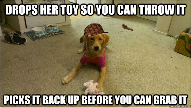 Drops her toy so you can throw it Picks it back up before you can grab it