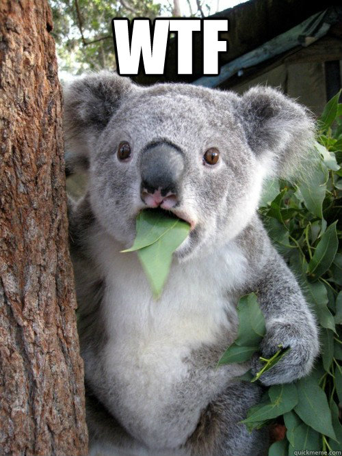 WTF  - WTF   Shocked Koala