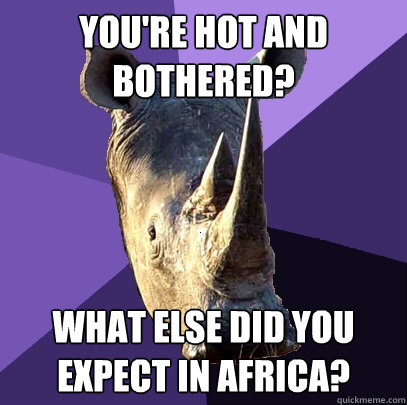 you're hot and bothered? what else did you expect in africa? - you're hot and bothered? what else did you expect in africa?  Sexually Oblivious Rhino