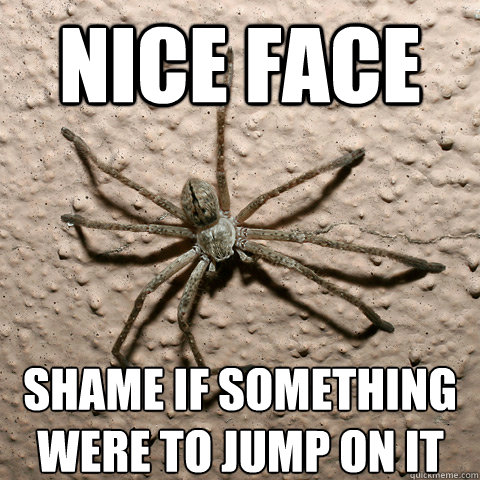 Nice face shame if something were to jump on it  creepy spider