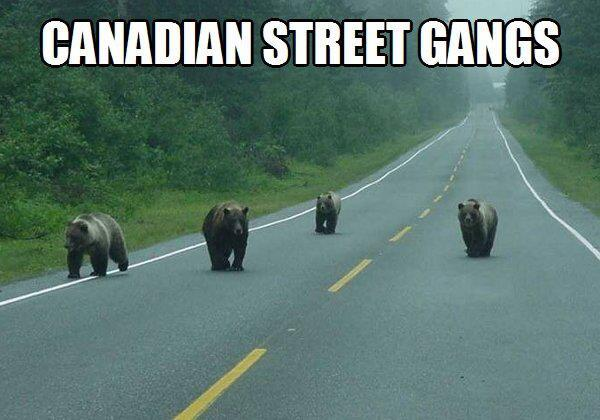 Canadian Street Gangs. -   Misc