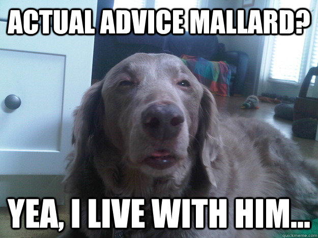 actual advice mallard dating Home forums dating and sex advice has anyone had actual success with online dating this topic contains 21 replies, has 1 voic.
